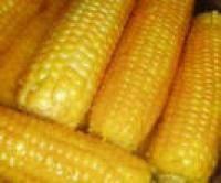 Семена кукурузы ДМС 3510 ФАО 350 (MAIS)