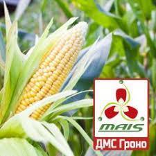 Семена кукурузы ДМС 2409 - NEW! ФАО 240 (MAIS)