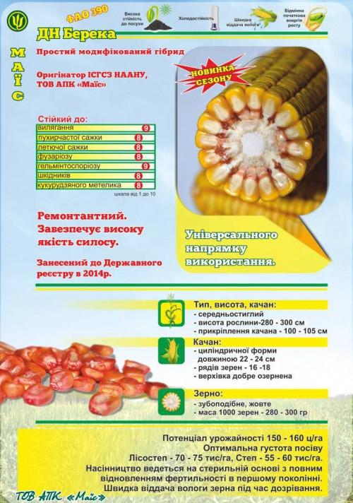 Семена кукурузы ДН Берека (Mais)