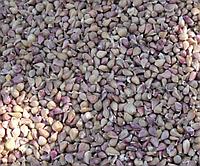 Озимый чеснок Любаша, 100 г (воздушные семена)
