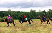 Вводный курс верховой езды на лошади 6 уроков (групповой)