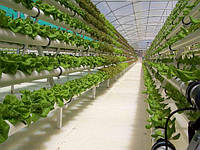 Ежегодная производительность фермы в Иорданской пустыне достигает 130 тонн овощей