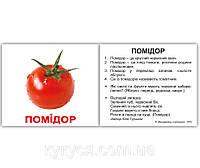 """Комплект карток """"Овочі з фактами"""" МІНІ 40"""