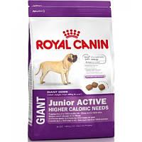 Royal Canin Giant Junior Active (Роял Канин) сухой корм для щенков 15 кг