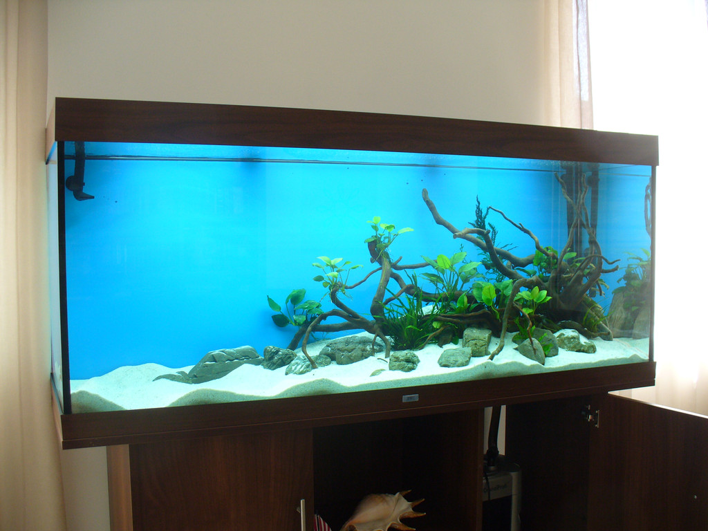 Аквариум Juwel RIO 400 для золотых рыбок. 1 день после запуска