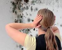 Защита стен от грибка материалами Сан Марко Италия / San Marco (работа + материал)
