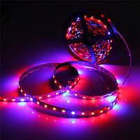 Dilux - Світлодіодна фитолента SMD 5050 (60 LED/m) IP20 ( 4красных + 2синих )
