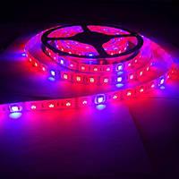 Фитолента светодиодная SMD 5050 (60 LED/m) IP65 ( 4красных + 2синих )