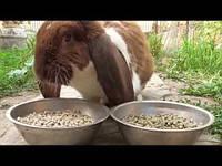 Комбикорм для кролика травяная мука и зерносмесь
