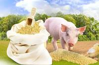 Корм для свиней дробленый