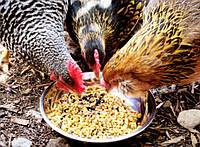 Сбалансированный сухой корм для кур