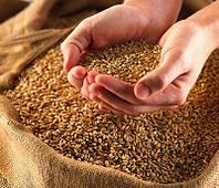 Пшеница кормовая в мешках, 25 кг