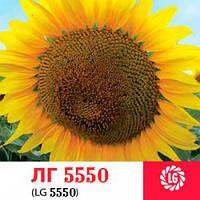 Семена подсолнечника ЛГ-5550 Лимагрейн, Франция