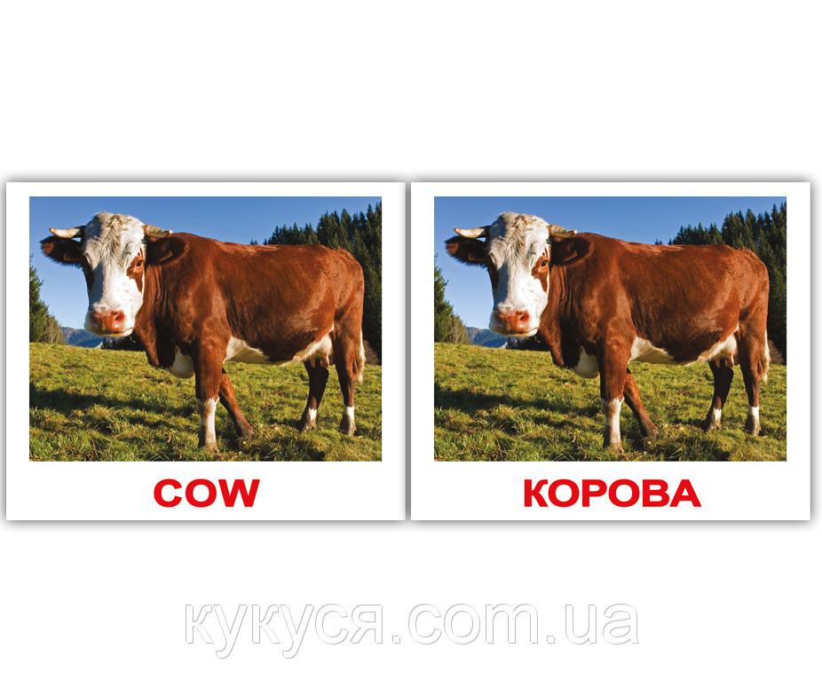 Комплект карточек «Domestic animals/Дом.жив.» МИНИ 40