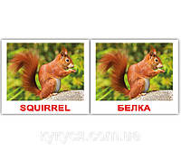 Комплект карточек «Wild animals/Дикие жив.» МИНИ 40