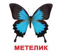 """Карточки большие украинские с фактами """"Комахи"""" лам. 20 карт., в пак. 16,5*19,5см, ТМ Вундеркинд"""