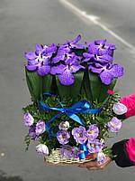 Флористическая композиция цветы Орхидеи Ванда , фото 1