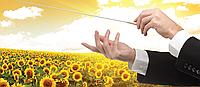 Семена подсолнечника Опера ПР (Syngenta)