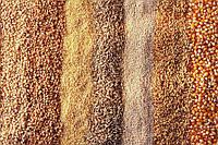 Зерно и масличные дорожают
