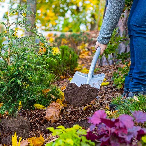 Горячие деньки сентября. Осенние работы в саду