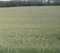 Правильное использование воды для полива газонов при засухе