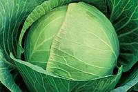 Семена капусты Подарок на вес