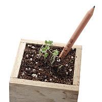 Карандаш, из которого может вырасти растение!
