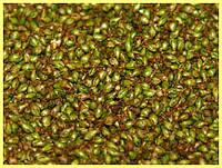 Семена подорожника 50 гр