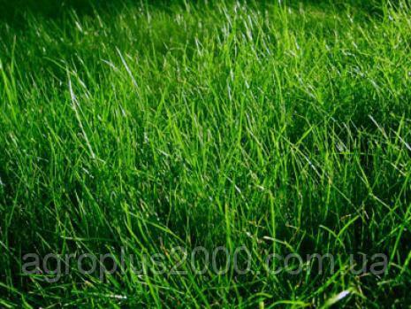 мини трава семена