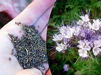 Семена Фацелия медоносная весом 500 граммов Украина
