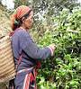 Зеленый чай органический fito, капсулы №40, фото 2