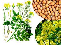 Семена Горчица белая весом 1 кг Украина