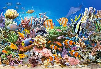 Пазлы Castorland  Подводный мир, 260 элементов