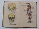 """М.Марков """"Анатомія і фізіологія людини"""". Підручник для 8 класу середньої школи. 1957 рік, фото 7"""