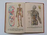 """М.Марков """"Анатомія і фізіологія людини"""". Підручник для 8 класу середньої школи. 1957 рік, фото 8"""