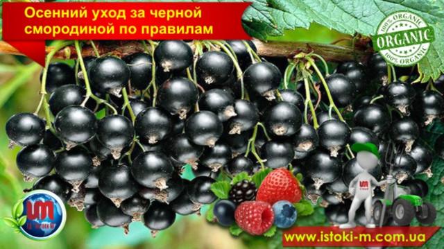 удобрение органическое_купить органическое удобрение_производство органических удобрений_купить биогумус_купить вермигрунт для рассады_купить вермигрунт универсальный_купить вермигумат_купить органическое удобрение оптом_удобрение органическое для овощных культур_удобрение органическое для плодовых кустарников_удобрение органическое для фруктовых деревьев_удобрение органическое для подкормки овощей_удобрение органическое для подкормки ягод_удобрение органическое для подкормки фруктовых деревьев_органическое земледелие