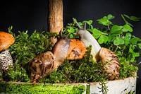 Улитки ахатина. Уход за ними, рацион питания, тонкости содержания и размножения.
