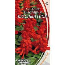 Насіння Квіти Сальвія Блискуча Червоний Гном 0,2 г Насіння України, фото 2