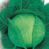 Семена капусты Белоснежка на вес