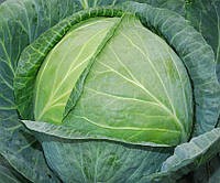 Семена капусты Лангедейкер на вес
