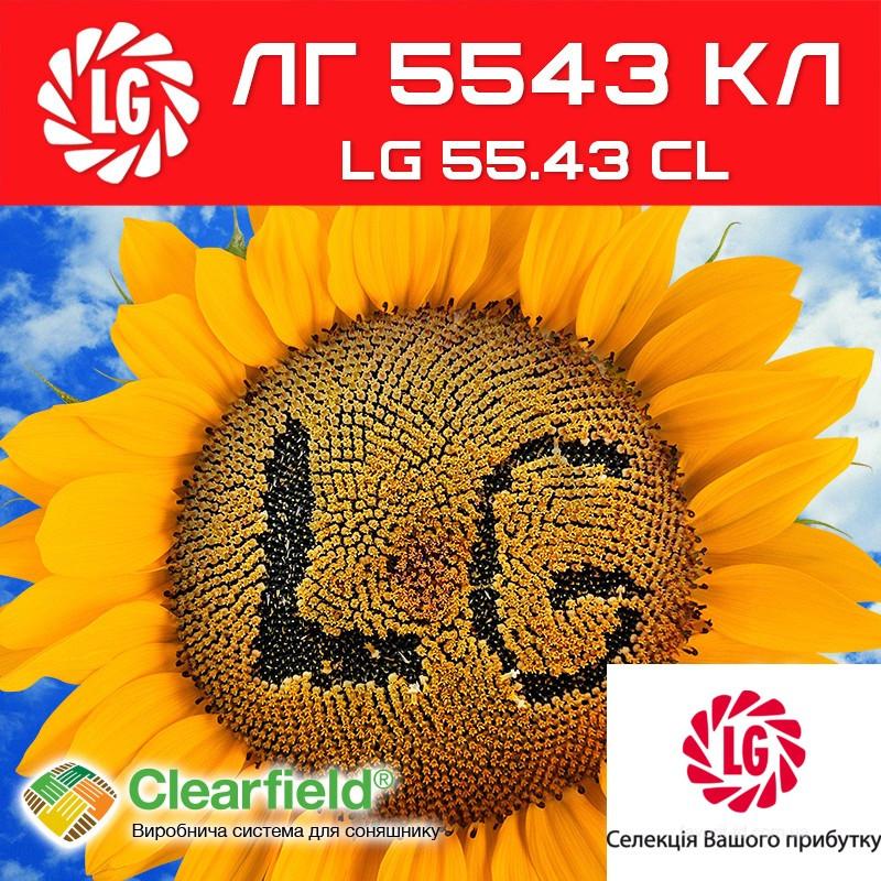 Семена подсолнуха LG5543CL Limagrain