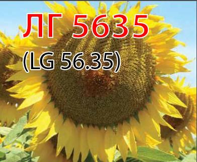 Семена подсолнуха ЛГ5635 Лимагрейн