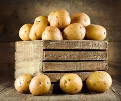 Новый сорт картофеля бьет реккорды