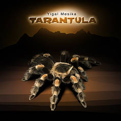 Tarantula by Yigal Mesika