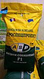 Гибрид подсолнечника ЖАЛОН, Купить засухоустойчивый и урожайный подсолнечник ЖАЛОН в Украине. Олийный. Экстра, фото 3