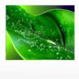 Поверхностно-активное вещество (ПАР) ТАЛАНТ, в.р. этоксилат изодецилового спирта, 900г/л.