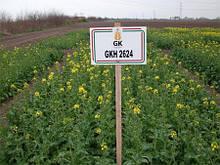 Озимий ріпак ГКХ 2624 . Високоврожайний гібрид ріпаку і стійкий до стресів. 1 п. од.(3 га).Вегетація 295-310.