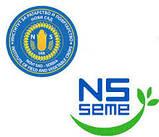 Семена подсолнечника НСХ 6343 под евролайтнинг, 112-118 дней, А-Е, г. Нови Сад ,Сербия / Экстра, фото 2