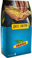 Кукуруза ДКС 2870 ФАО 210, 100-120 ц/га,1000 шт/ 240–380 гр.,Монсанто / Monsanto / Декалб