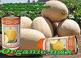Семена, дыня Карамель (Франция), инкрустированные, 500 г Фермерская банка, фото 2